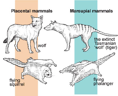 What Are Examples of Mammals images